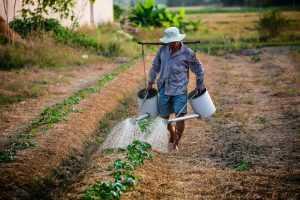 رجل يسقي مزروعاته زراعة أسطح المنازل