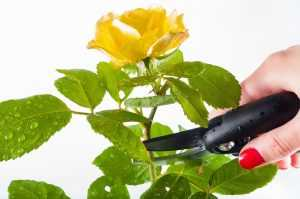 طريقة حفظ الورد الطبيعي في الثلاجة